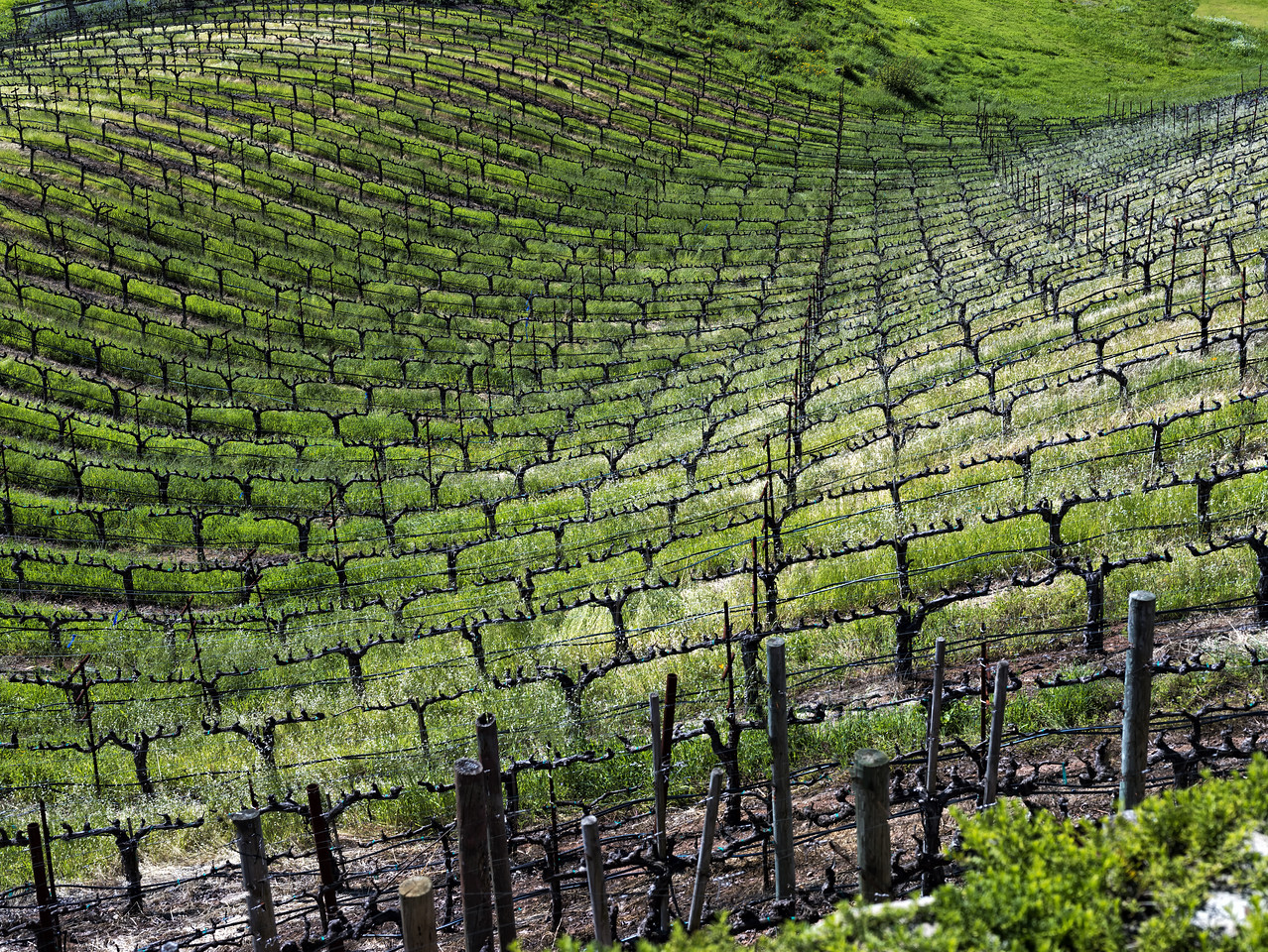 Rolling Vineyard, Napa Valley