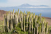 Lomo de las Nieves, La Gomera, Canary Islands