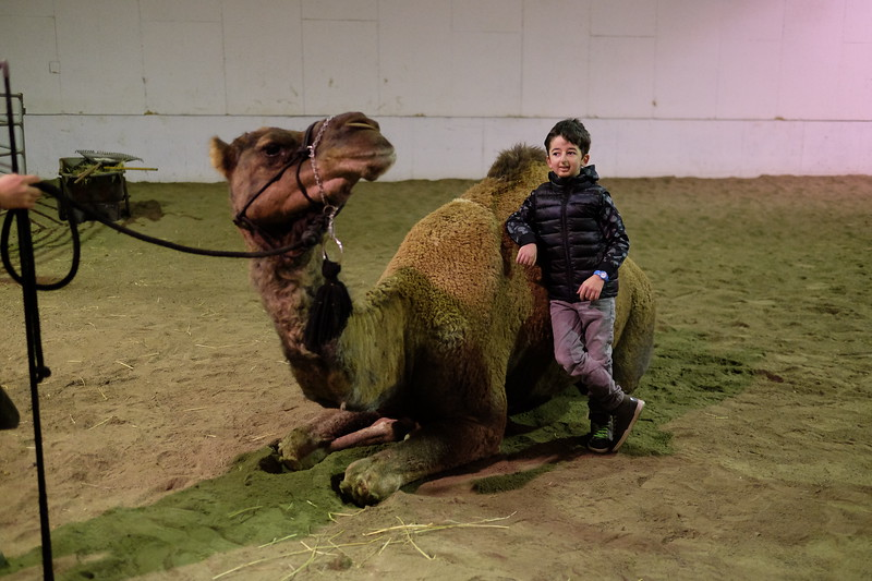 Casey Wright hanging with a camel at the Virtue Studio Ranch