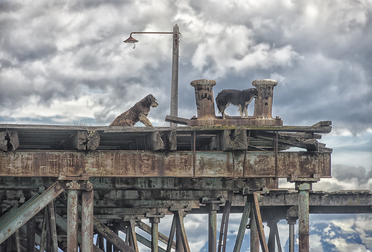 Dogs of the Dock, Singular Hotel, Puerto Natales, Chile