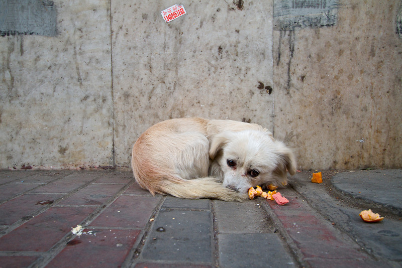 A homeless puppy curls for warmth and sleeps on a sidewalk.