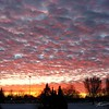 Glowing altocumulus sunset