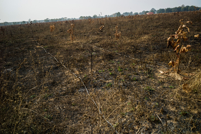 Chattisgarh, India, February 2015:   Allegedly the employees of coal mining companies burn down the fields of tree saplings to claim the land was empty.   Photographs for a story on land allocation for coal mines in Chattisgarh.  Modi's new government in the centre has relaxed the environmental regulations so the land can be allocated to both public and private sector companies easily.   Photo by Sami Siva for Al Jazeera America.