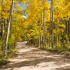 Dirt Road Aspens - Colorado<br /> best print size - all