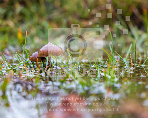 18 - New Forest Fungi