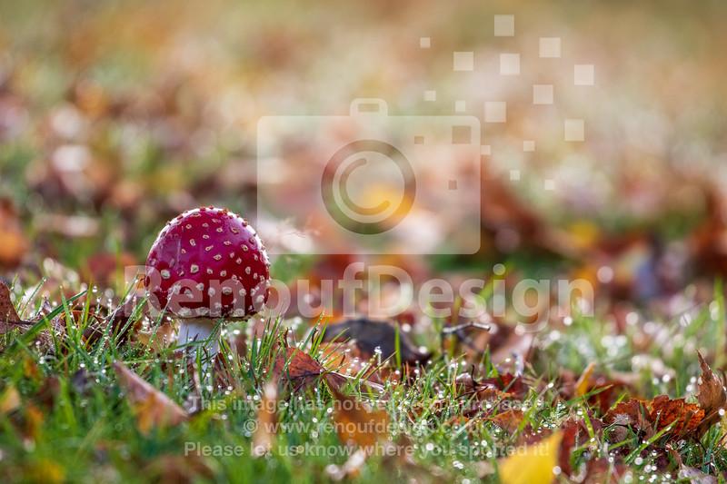 12 - October Photographs