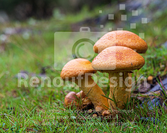 12 - New Forest Fungi