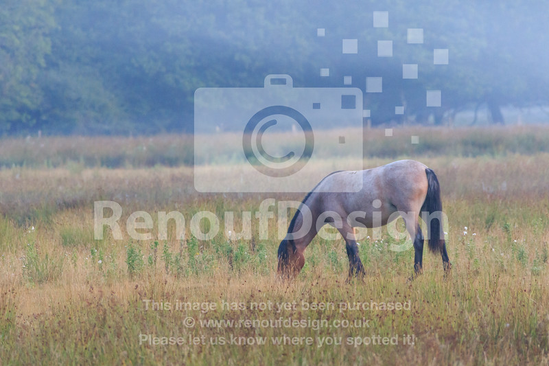 07 - New Forest - August