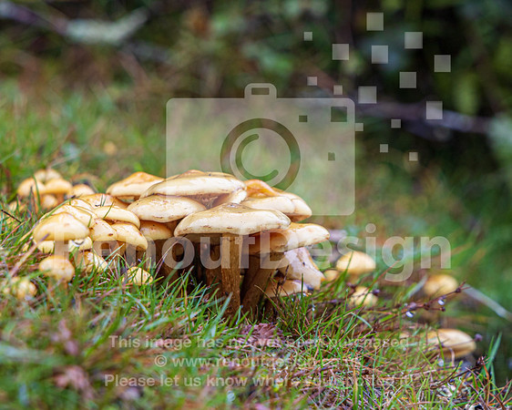 13 - New Forest Fungi