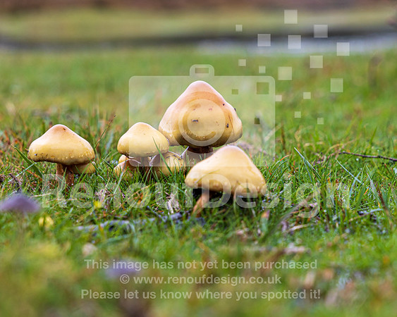16 - New Forest Fungi