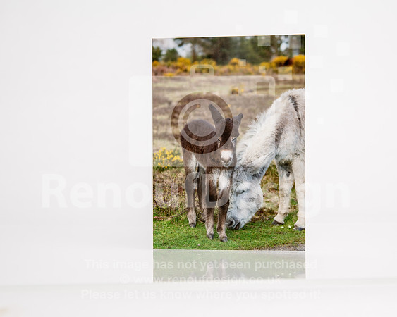 New Forest Wildlife Images