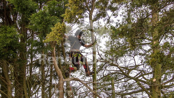 004 - R Purdie Tree and Garden Services