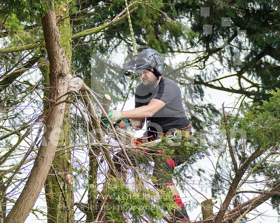 024 - R Purdie Tree and Garden Services