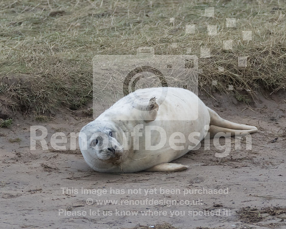 Seals at Donna Nock
