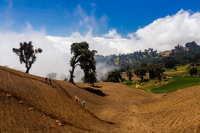 High altitude farming / Alvarado, Costa Rica