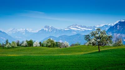 Spring blossom / Meggen, Switzerland