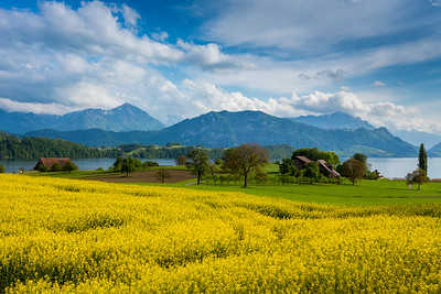 Colors of spring / Merlischachen, Switzerland
