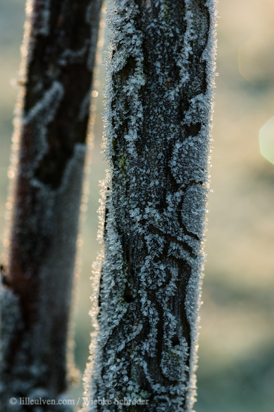 First frost of the year