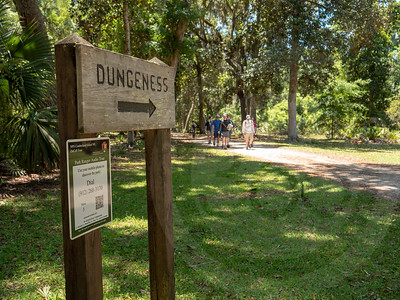 Cumberland Island_Dungeness Trail_1277333