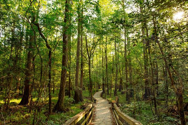 Congaree National Park-9068