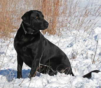 Stella in the snow