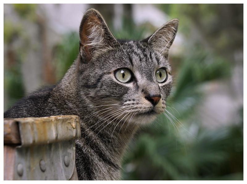 Little cat on a ladder.