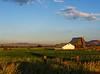 Kittitas County pastoral #5