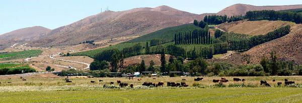 Kittitas Valley idyll