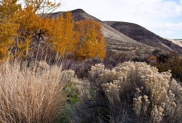Yakima Canyon autumn