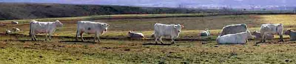 Kittitas County pastoral #1