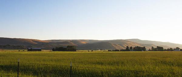Kittitas County pastoral #4