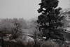 Frost Yakima