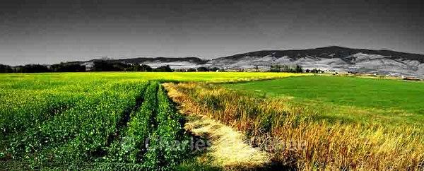 Kittitas County pastoral #2