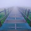 Foggy Trek