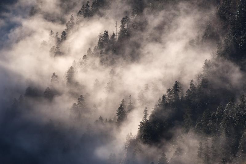 A Misty Morning on the Dunajec