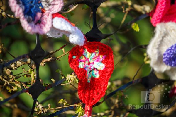 09 - Pennington Flowers