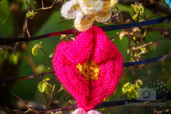 12 - Pennington Flowers