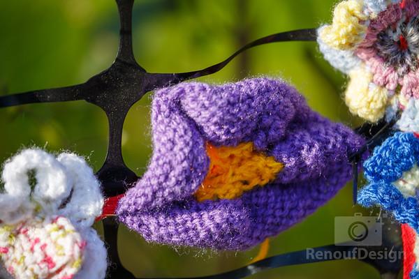 14 - Pennington Flowers