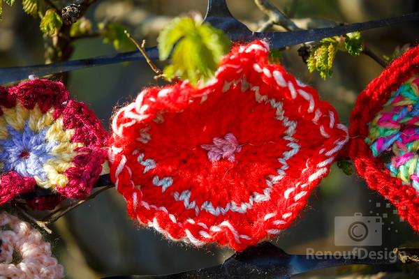 10 - Pennington Flowers