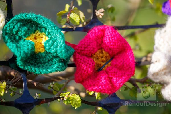 13 - Pennington Flowers