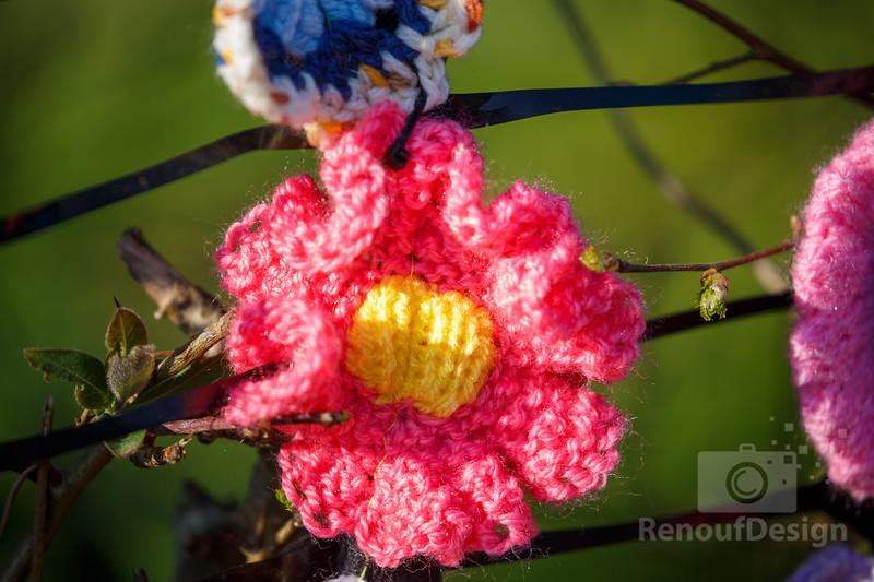 06 - Pennington Flowers