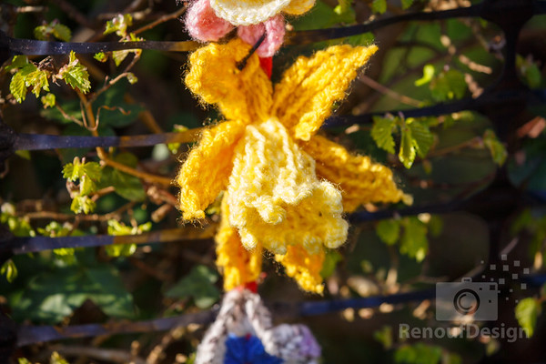 11 - Pennington Flowers
