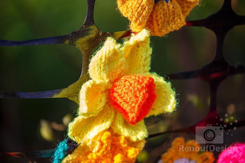 08 - Pennington Flowers