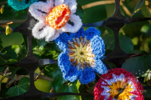 04 - Pennington Flowers