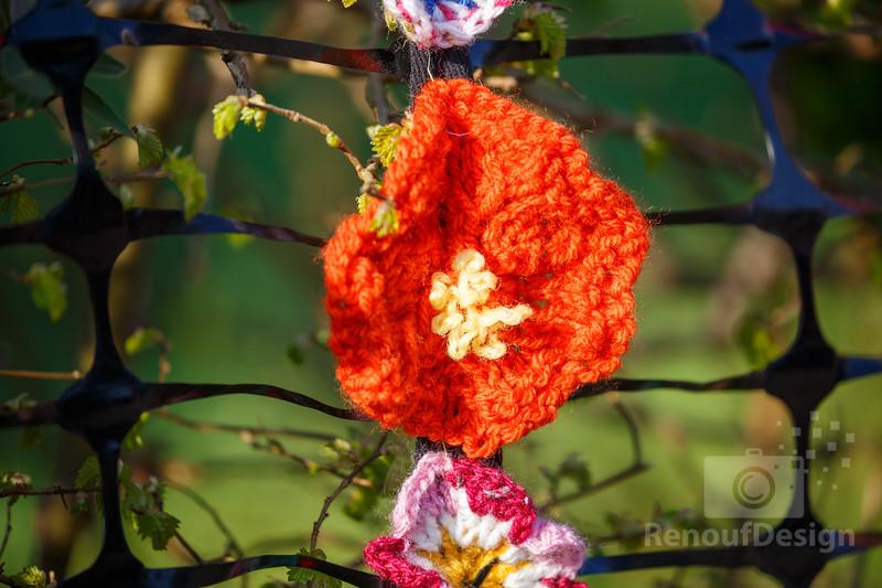 05 - Pennington Flowers