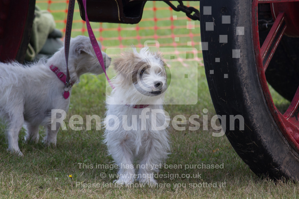 Dog Show and Fun Day - 001