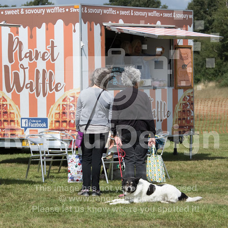 Dog Show and Fun Day - 007
