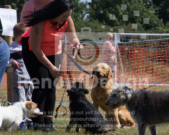 Dog Show and Fun Day - 021