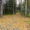Leaf covered trail