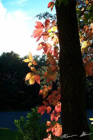 Sunlit colors on a neighborhood tree